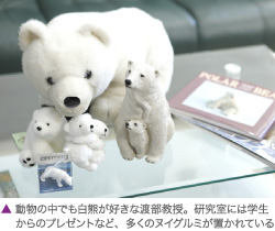 研究室には学生からのプレゼントなど、多くのヌイグルミが置かれている