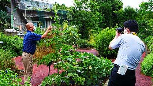 読売新聞 朝刊で本学薬用植物園が紹介されました